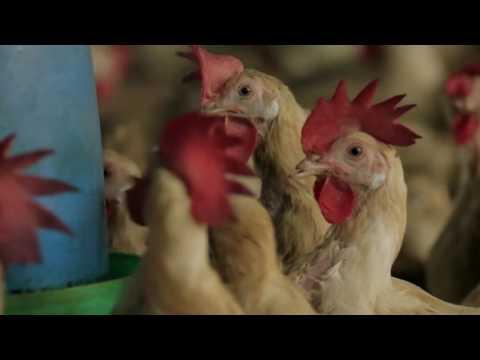 Togo-CERSA : Des formations pratiques pour booster la filière avicole