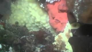 Diving in Antarctica_Vernadsky Station