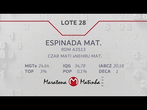 LOTE 28  Maratona Matinha