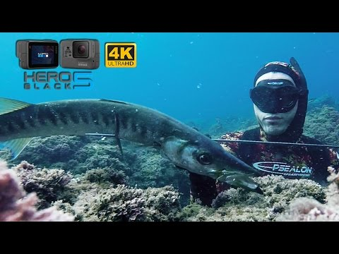 Spearfishing - GoPro Hero 5 Black - Slow motion Barracuda