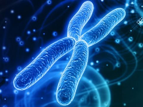 The Second Human Chromosome