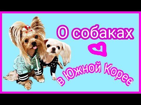 Собаки в Южной Корее. Стрижка. Выгул.