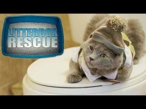 Litter Box Rescue - Cat Reality TV (Gordon Ramsey Parody)