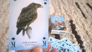 Dzikie ptaki Polski - unboxing