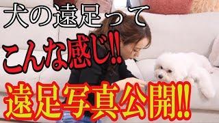 犬の遠足ってこんな感じ!!!遠足写真大公開!!!