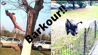 Barkour Dogs |  Dogs jumping over fences and climbing on trees