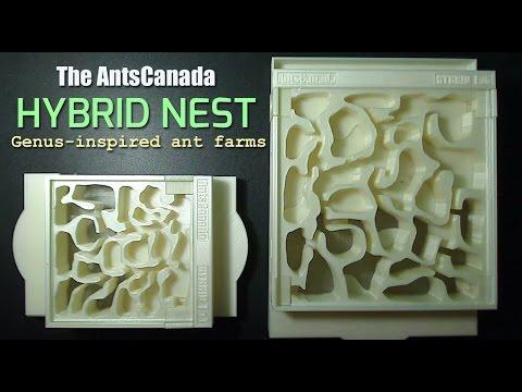 new genus inspired ant