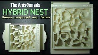 New Genus-inspired Ant Farm | The AntsCanada Hybrid Nest