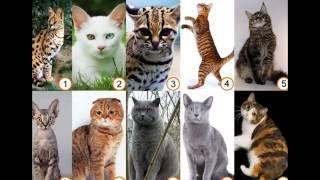 Породы кошек Топ 30 Breeds of cats Top 30