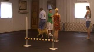 Chinese Shar-pei Really Doing Novice Cdsp Obedience Blue Ridge Dtc July 1 2012 Trial 1