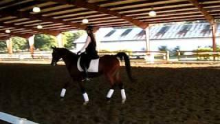 Lisa Wilcox Dressage Clinic Video 1