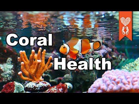 Why Random Corals Die In Your Aquarium