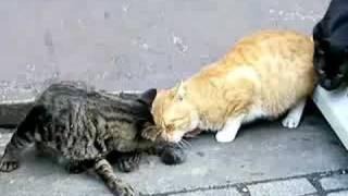 猫のしっぽにマタタビふりかけてみた thumbnail