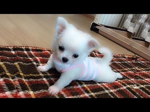【面白い動画】 かわいい猫 - かわいい犬 - 最も面白いペットの動画 #58