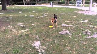 Basic Training Orlando Dog Obedience