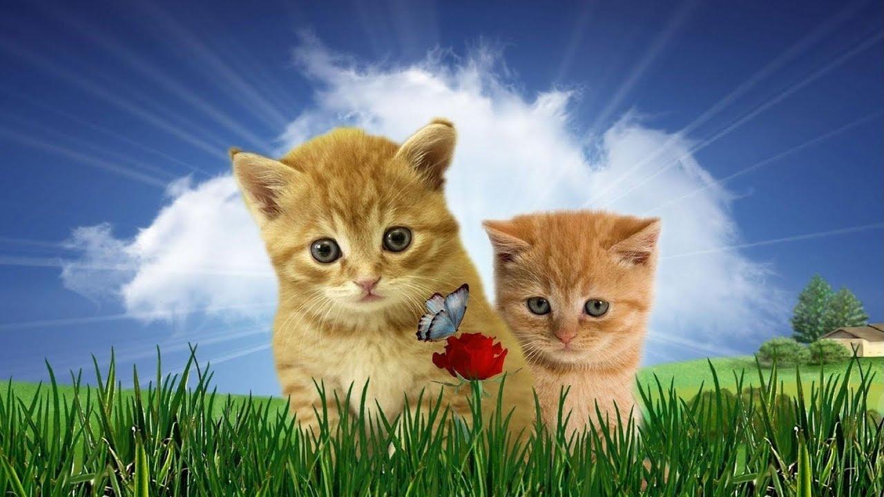 Надпись открытки, картинки с красивыми котиками живыми