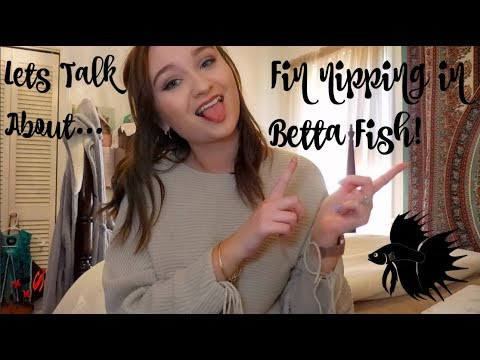 LETS TALK ABOUT TAIL BITING IN BETTA FISH! | ItsAnnaLouise