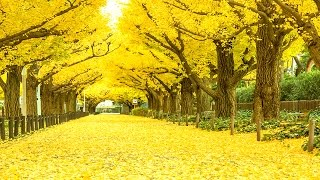 Top 10 Most Amazing Beautiful Tree Tunnels | Top World |