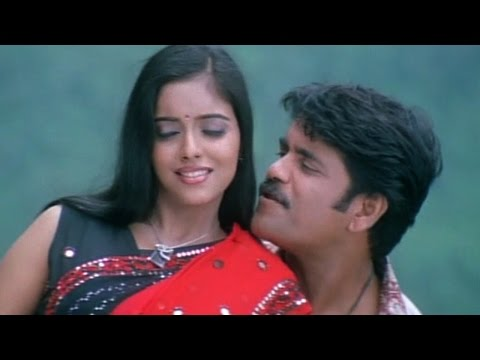 Shivamani Telugu Movie || Sun Sun Video Song || Nagarjuna, Asin