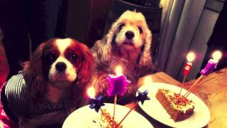 Dog Furry Friend Birthday Party Tag King Charles Cavalier Cocker Spaniel 2012 Halloween Costume