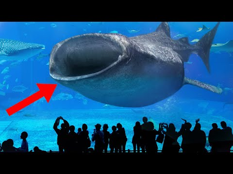 10 World's Biggest & Most Amazing Aquariums