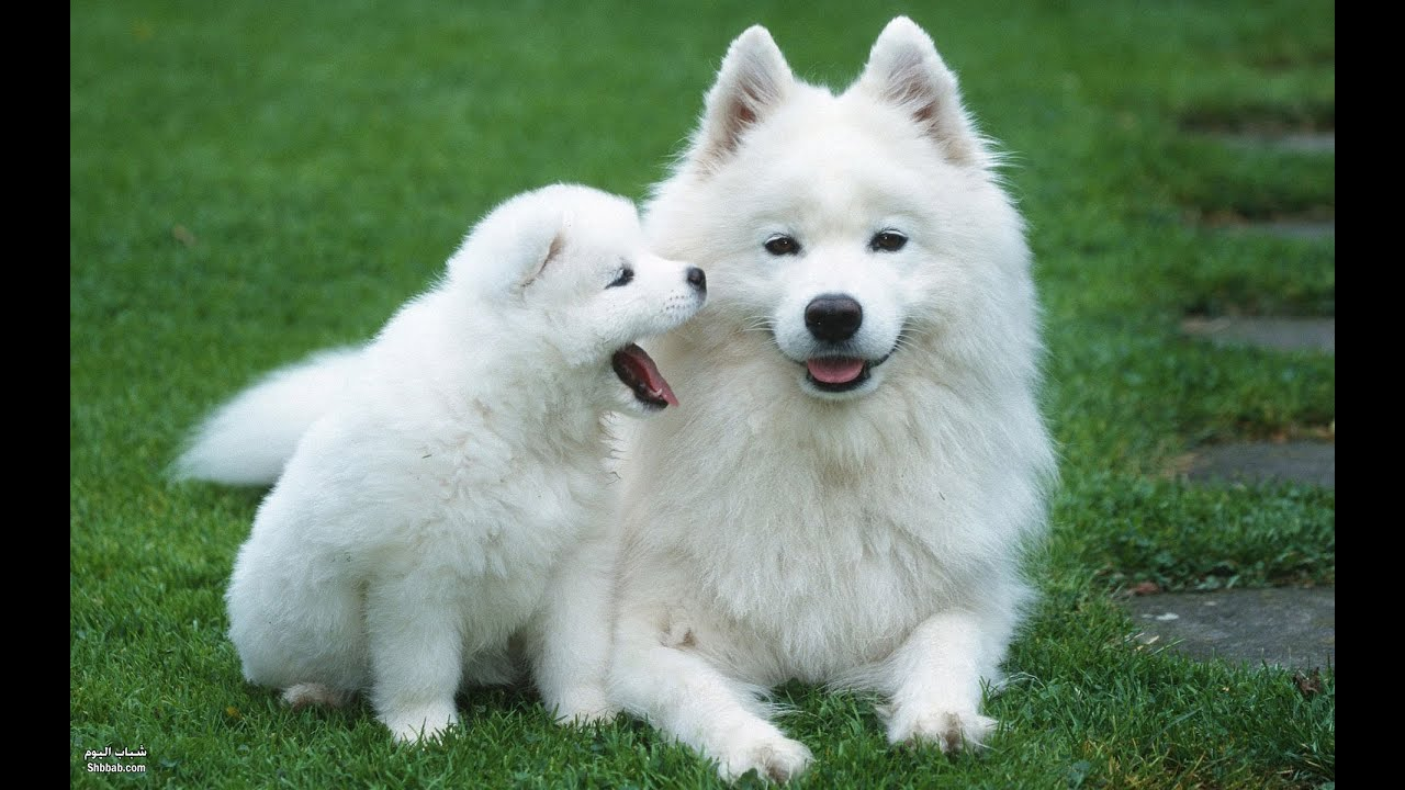 See Picture Nicest Dogs