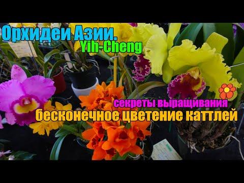Цветение каттлей - все секреты