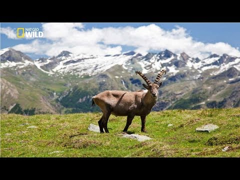 National Geographic - Italian Wildlife  - New Documentary HD 2018