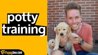 How to Potty-Train an 8-Week-old Puppy Step by Step (12 steps)