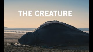 Killed By Plastic Pollution: Unknown Animal Washes Up On Cornwall Beach. #TheCreature