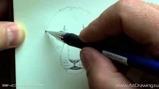 Набросок львенка карандашом