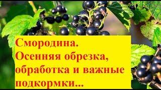 Смородина  Осенняя обрезка, обработка и подкормки