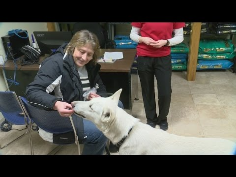 Dog rescued from icy waters of Lake Michigan gets forever home