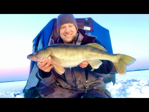 Ice Fishing For Walleye All Day Paid Off! (GIANT!)