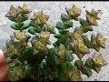 ДЕНЕЖНОЕ ДЕРЕВО Что делать если опадают листья mp3