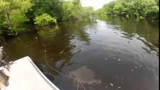 bowfishing for gator gar