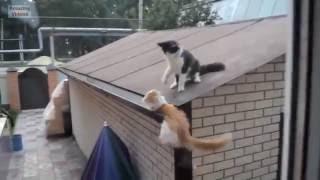Смешные коты. Кот упал об стену.(, 2016-08-28T19:59:42.000Z)