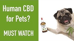 Can I Give My Dog Human CBD Oil? Find the Answer HERE