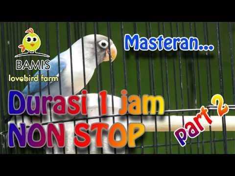 Masteran Lovebird 1 Jam Nonstop Ngekek Panjang Kusumo ( Part 2 ) || BAMIS LOVEBIRD Farm