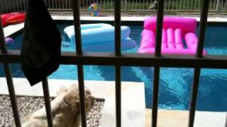 Dog Barking At The Pool Toys