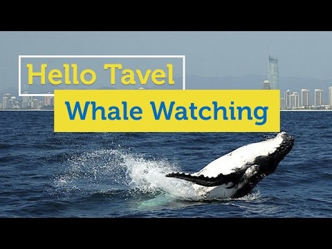 Hello Study TV - Whale Watching