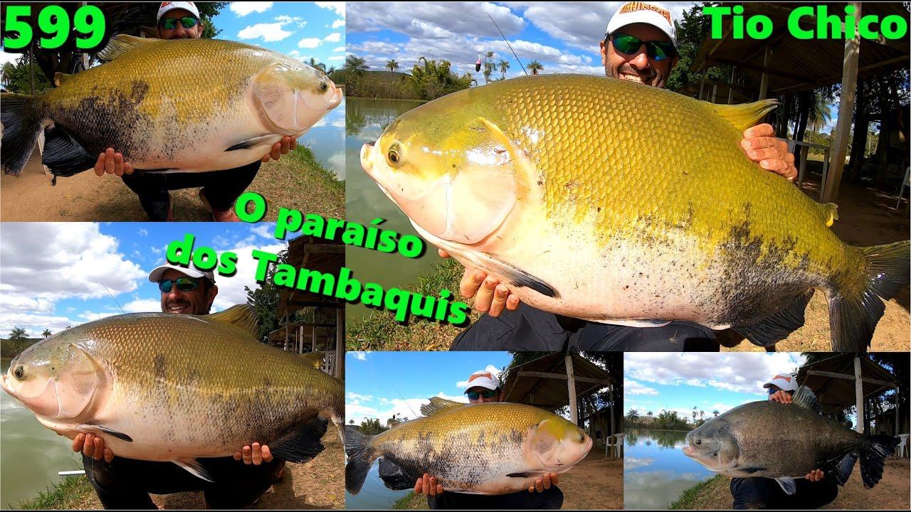 O novo reduto dos VERDÕES que o Fishingtur descobriu - Conheça o Tio Chico - Programa 599 Pesca