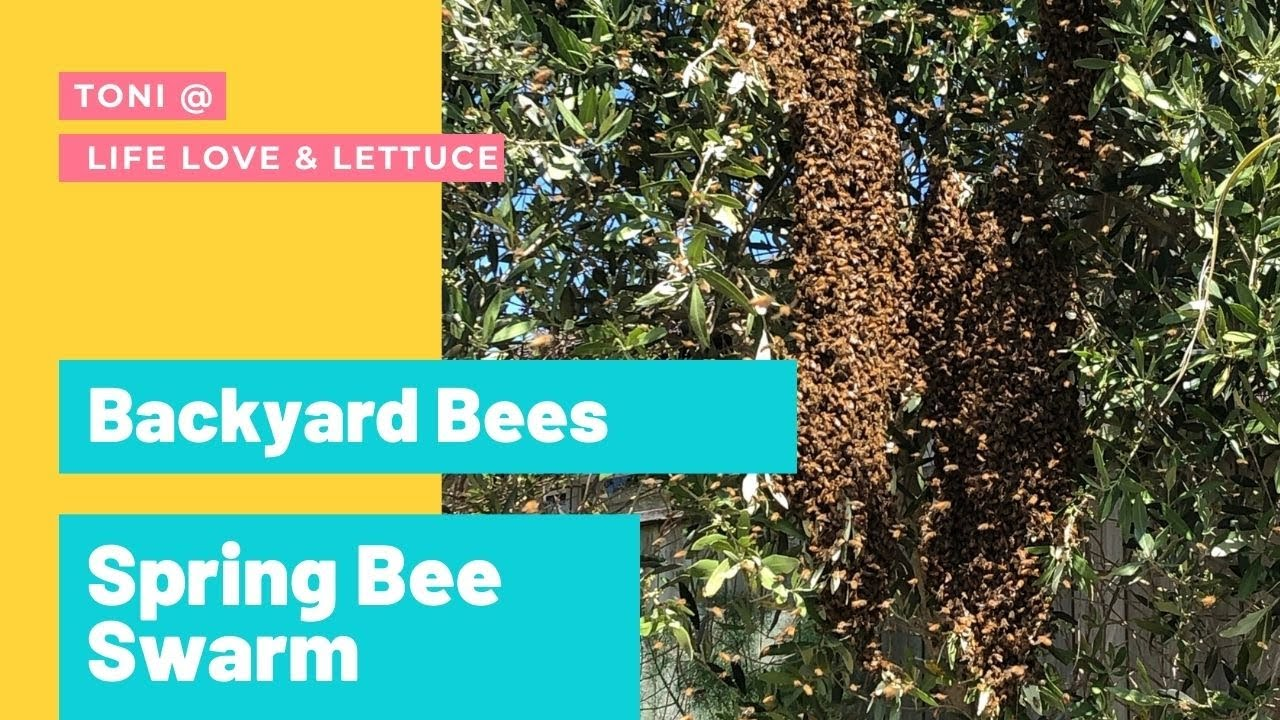 What to do with a Bee Swarm