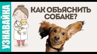 Как объяснить собаке: где туалет, кто хозяин, команду голос. Узнавайка