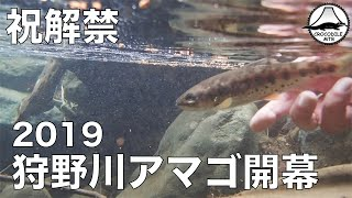 【渓流釣り】祝解禁 2019狩野川アマゴ開幕