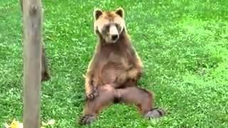 30 января 2016 г.(Настоящий русский медведь , сидит и письку теребит., 2016-01-30T10:34:50.000Z)