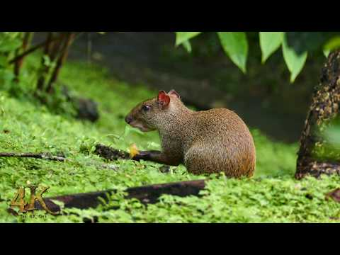 Panama: One hour 4K footage of the wildlife in the Soberania jungle - Part 2