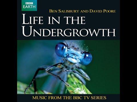 Life in the Undergrowth 2005  Ben Salisbury & David Poore