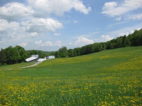 A Farm for Years to Come - Richardson Farm Hartland