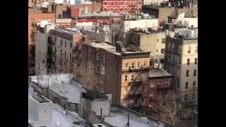 Redtail Hawk hunting Pigeons NYC